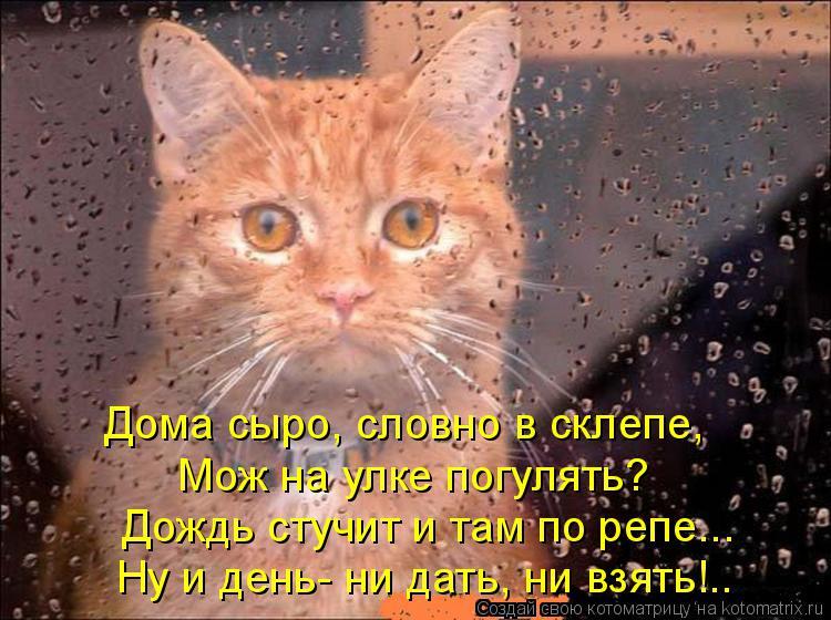 Котоматрица: Дома сыро, словно в склепе,  Мож на улке погулять? Дождь стучит и там по репе... Ну и день- ни дать, ни взять!..