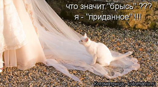 """Котоматрица: что значит """"брысь"""" ??? я - """"приданное"""" !!!"""