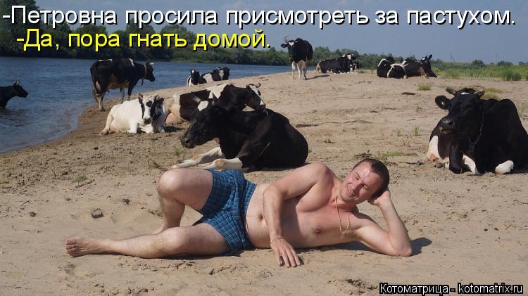 Котоматрица: -Петровна просила присмотреть за пастухом. -Да, пора гнать домой.