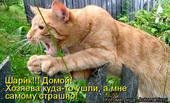 Котоматрица: Шарик!!! Домой! Хозяева куда-то ушли, а мне  самому страшно!