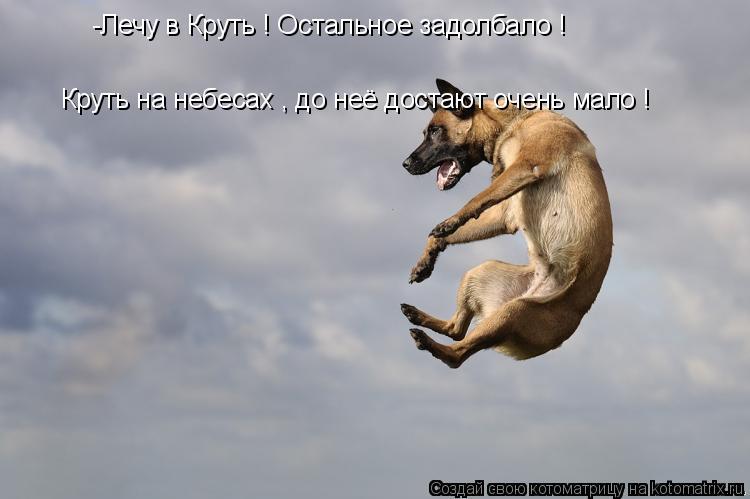 Котоматрица: -Лечу в Круть ! Остальное задолбало ! Круть на небесах , до неё достают очень мало !