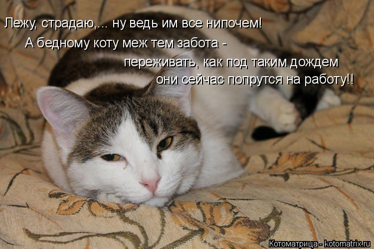 Котоматрица: Лежу, страдаю,... ну ведь им все нипочем! А бедному коту меж тем забота - переживать, как под таким дождем они сейчас попрутся на работу!!