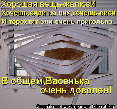 Котоматрица: Хорошая вещь-жалюзИ Хочешь,сиди на них,хочешь-виси И торохтят они очень прикольно В общем,Васенька очень доволен!