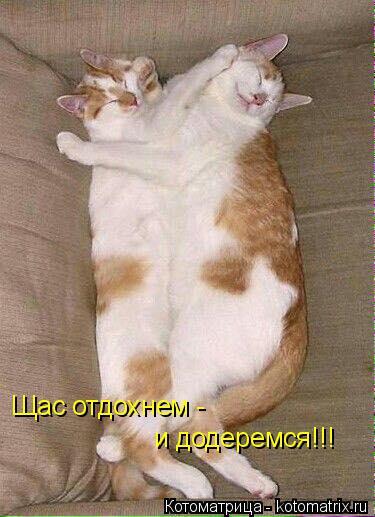 Котоматрица: Щас отдохнем -  и додеремся!!!
