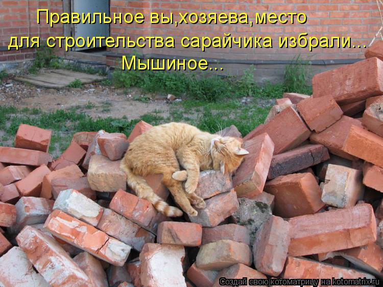 Котоматрица: Правильное вы,хозяева,место для строительства сарайчика избрали... Мышиное...