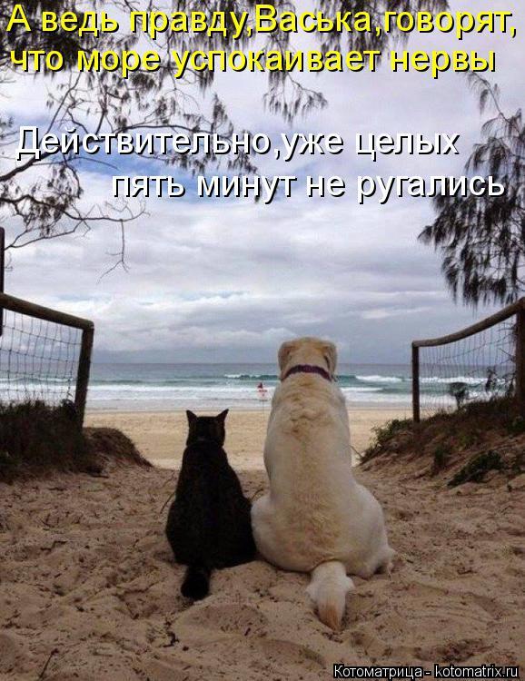 Котоматрица: А ведь правду,Васька,говорят, что море успокаивает нервы Действительно,уже целых пять минут не ругались