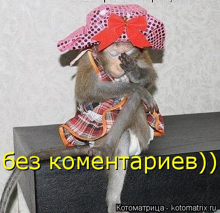 Котоматрица: без коментариев))