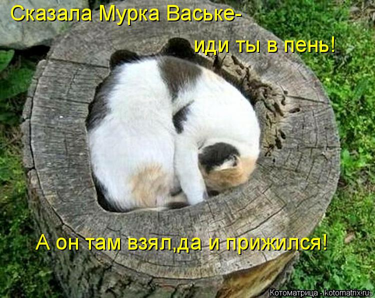 Котоматрица: Сказала Мурка Ваське- иди ты в пень! А он там взял,да и прижился!