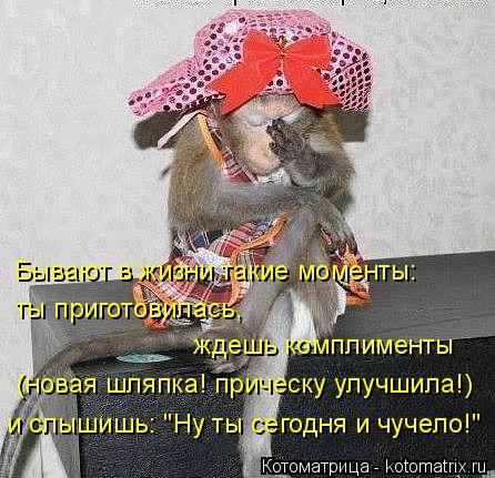 """Котоматрица: Бывают в жизни такие моменты:  ты приготовилась,  ждешь комплименты (новая шляпка! прическу улучшила!) и слышишь: """"Ну ты сегодня и чучело!"""""""