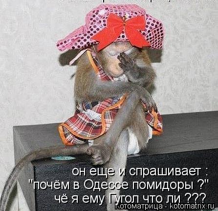 """Котоматрица: он еще и спрашивает : """"почём в Одессе помидоры ?"""" чё я ему Гугол что ли ???"""