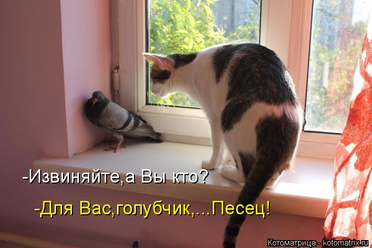 Котоматрица: -Извиняйте,а Вы кто? -Для Вас,голубчик,...Песец!
