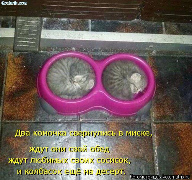 Котоматрица: Два комочка свернулись в миске, ждут они свой обед ждут любимых своих сосисок, и колбасок ещё на десерт.
