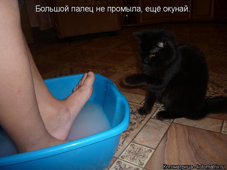 Котоматрица: Большой палец не промыла, ещё окунай.