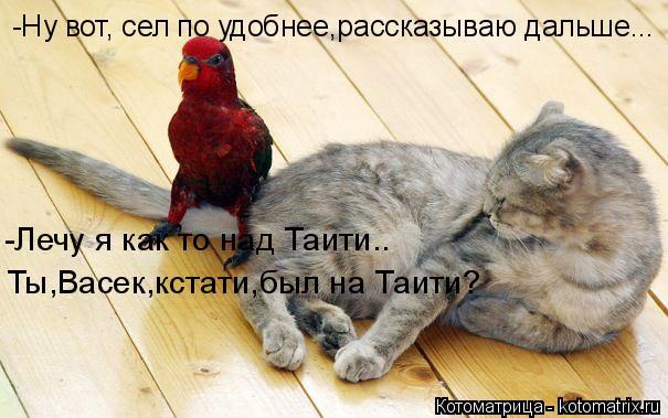 Котоматрица: -Ну вот, сел по удобнее,рассказываю дальше... -Лечу я как то над Таити..  Ты,Васек,кстати,был на Таити?