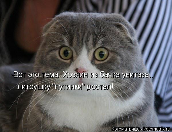 "Котоматрица: -Вот это тема..Хозяин из бачка унитаза.. литрушку ""путинки"" достал!"
