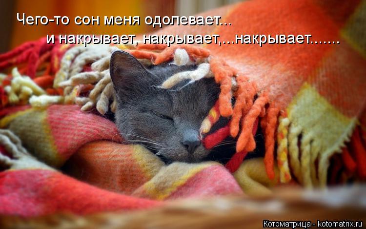 Котоматрица: Чего-то сон меня одолевает... и накрывает, накрывает,...накрывает.......