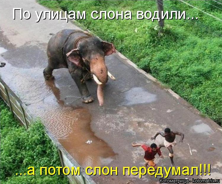 Котоматрица: По улицам слона водили... ...а потом слон передумал!!!