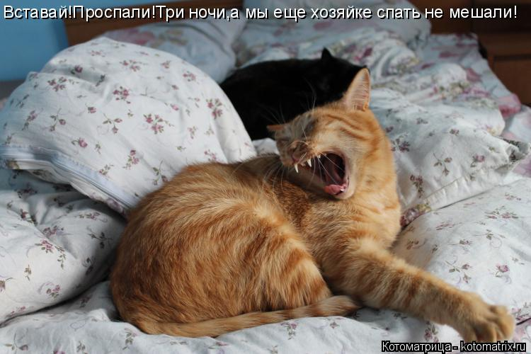 Котоматрица: Вставай!Проспали!Три ночи,а мы еще хозяйке спать не мешали!