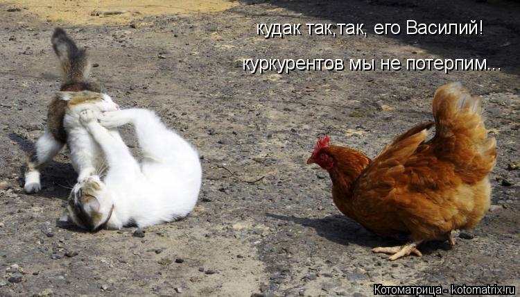 Котоматрица: кудак так,так, его Василий! куркурентов мы не потерпим...