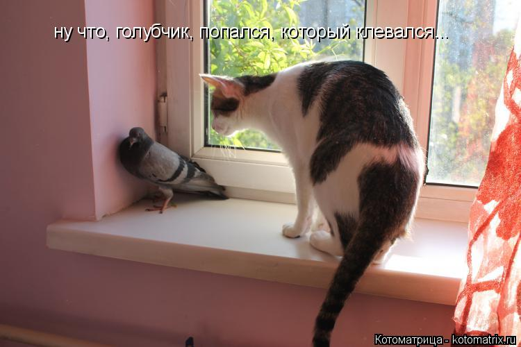 Котоматрица: ну что, голубчик, попался, который клевался...