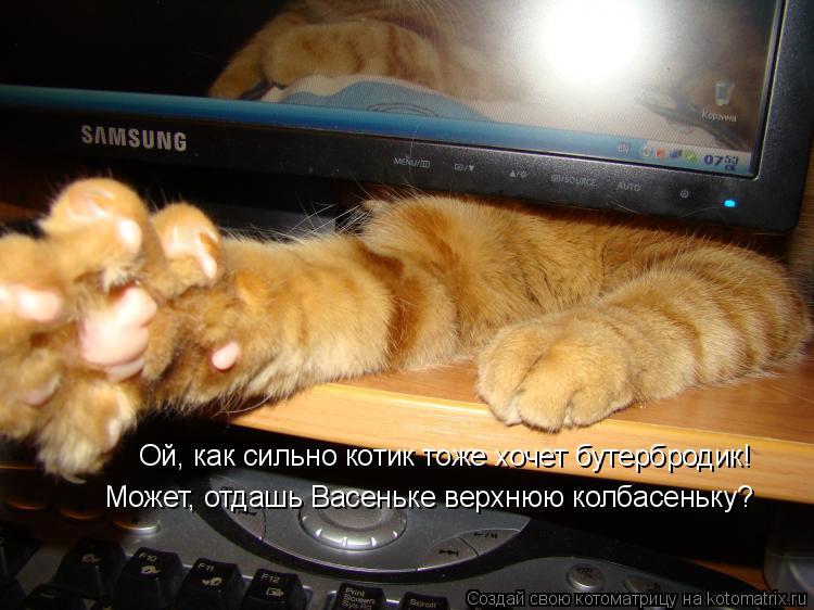 Котоматрица: Ой, как сильно котик тоже хочет бутербродик! Может, отдашь Васеньке верхнюю колбасеньку?