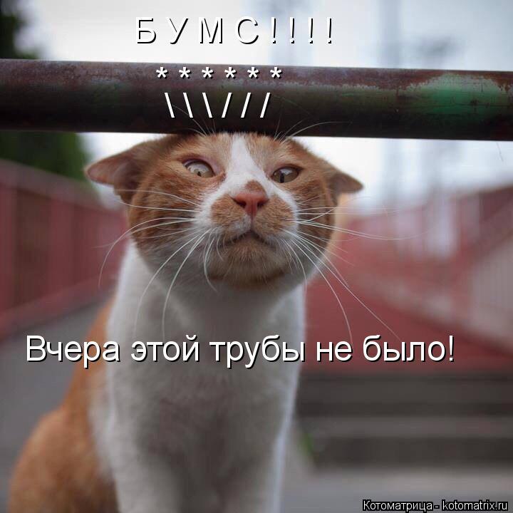 Котоматрица: Б У М С ! ! ! ! * * * * * * \ \ \ / / / Вчера этой трубы не было!