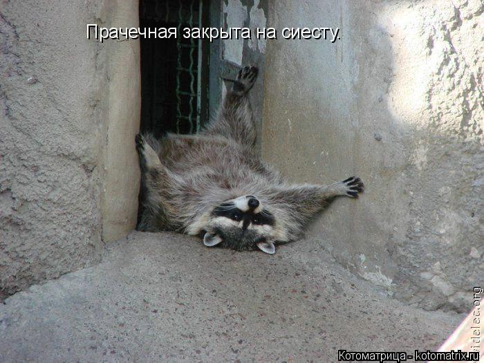 Котоматрица: Прачечная закрыта на сиесту.