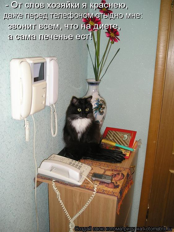 Котоматрица: - От слов хозяйки я краснею, даже перед телефоном стыдно мне: звонит всем, что на диете, а сама печенье ест!