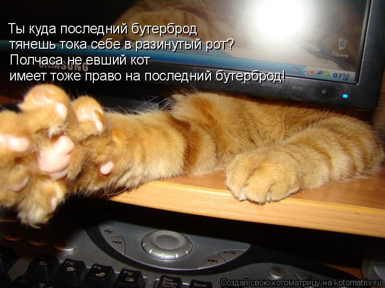 Котоматрица: Ты куда последний бутерброд тянешь тока себе в разинутый рот? Полчаса не евший кот  имеет тоже право на последний бутерброд!