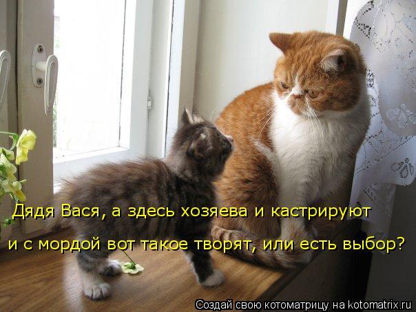 Котоматрица: Дядя Вася, а здесь хозяева и кастрируют  и с мордой вот такое творят, или есть выбор?