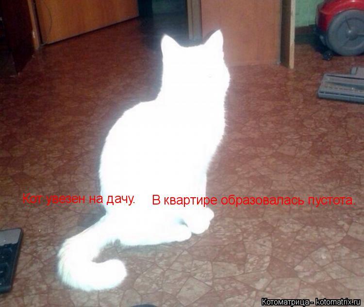 Котоматрица: Кот увезен на дачу. В квартире образовалась пустота.