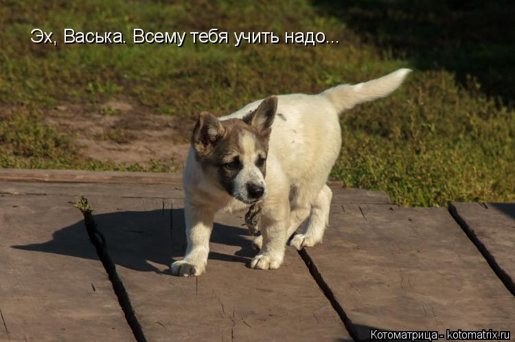 Котоматрица: Эх, Васька. Всему тебя учить надо...