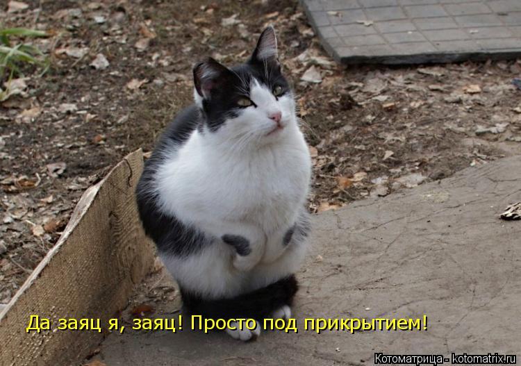 Котоматрица: Да заяц я, заяц! Просто под прикрытием!