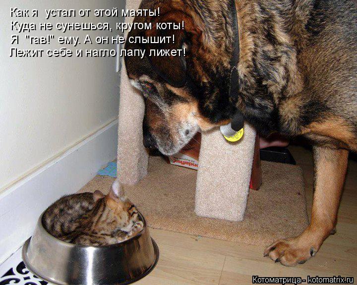 """Котоматрица: Как я  устал от этой маяты! Куда не сунешься, кругом коты! Я  """"гав!"""" ему. А он не слышит! Лежит себе и нагло лапу лижет!"""