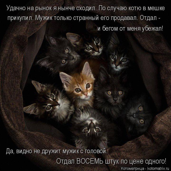 Котоматрица: Удачно на рынок я нынче сходил. По случаю котю в мешке  прикупил. Мужик только странный его продавал. Отдал -  и бегом от меня убежал! Да, видно