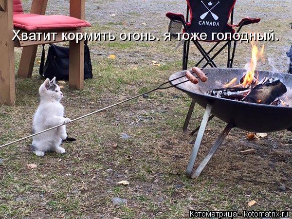 Котоматрица: Хватит кормить огонь. я тоже голодный.