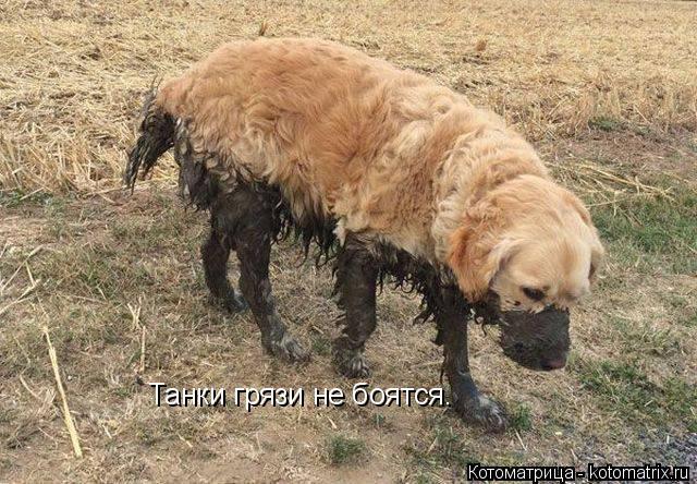 Котоматрица: Танки грязи не боятся.