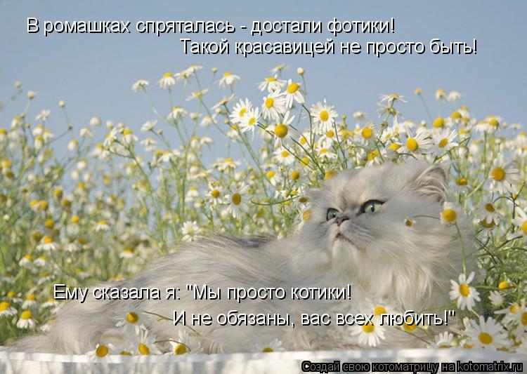"""Котоматрица: В ромашках спряталась - достали фотики! Такой красавицей не просто быть! Ему сказала я: """"Мы просто котики! И не обязаны, вас всех любить!"""""""