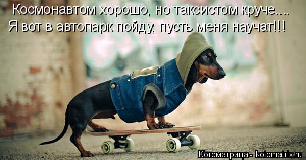 Котоматрица: Я вот в автопарк пойду, пусть меня научат!!! Космонавтом хорошо, но таксистом круче....