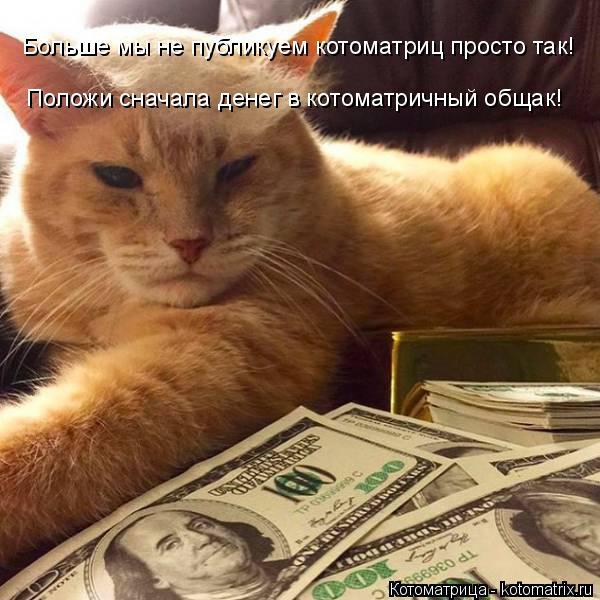 Котоматрица: Больше мы не публикуем котоматриц просто так! Положи сначала денег в котоматричный общак!