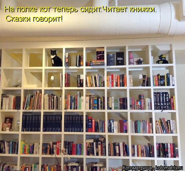 Котоматрица: На полке кот теперь сидит.Читает книжки. Сказки говорит!