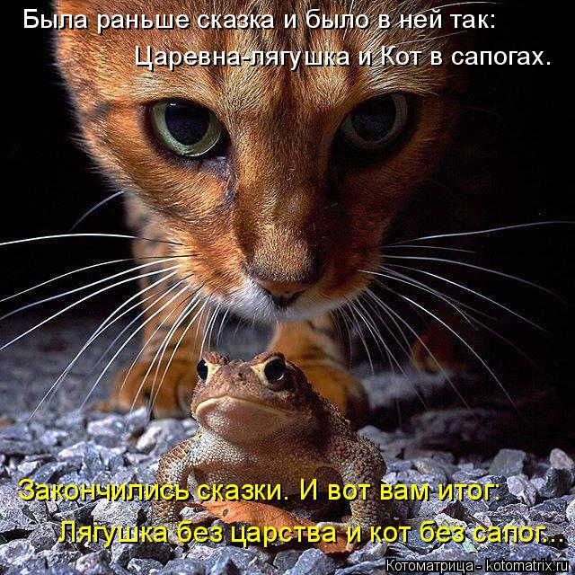 Котоматрица: Лягушка без царства и кот без сапог... Закончились сказки. И вот вам итог: Царевна-лягушка и Кот в сапогах. Была раньше сказка и было в ней так: