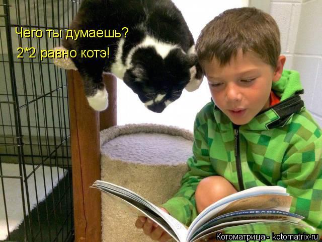 Котоматрица: Чего ты думаешь? 2*2 равно котэ!