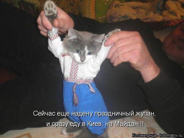 Котоматрица: Сейчас еще надену праздничный жупан, и сразу еду в Киев, на Майдан!!!