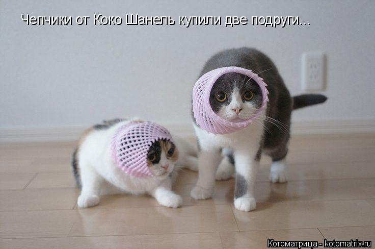 Котоматрица: Чепчики от Коко Шанель купили две подруги...