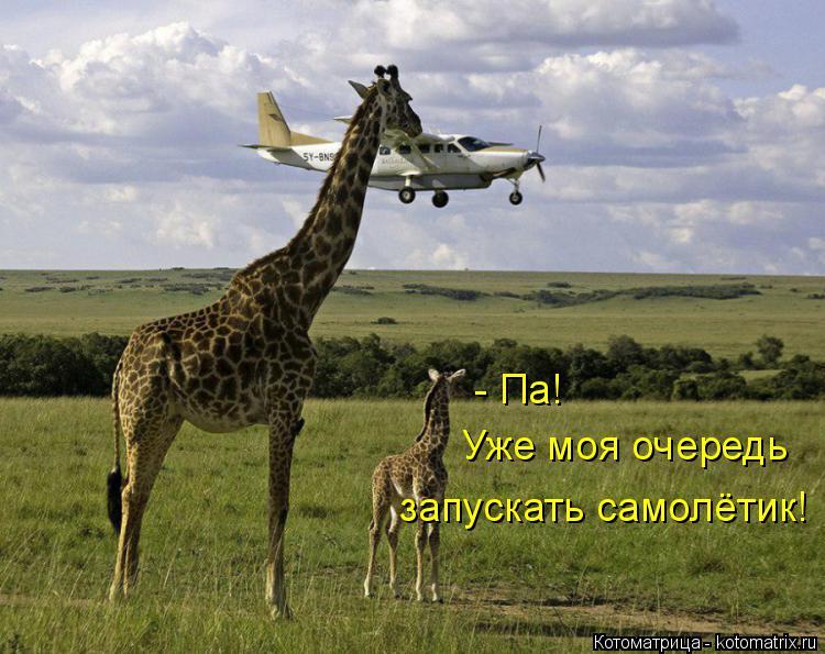 Котоматрица: - Па! Уже моя очередь запускать самолётик!