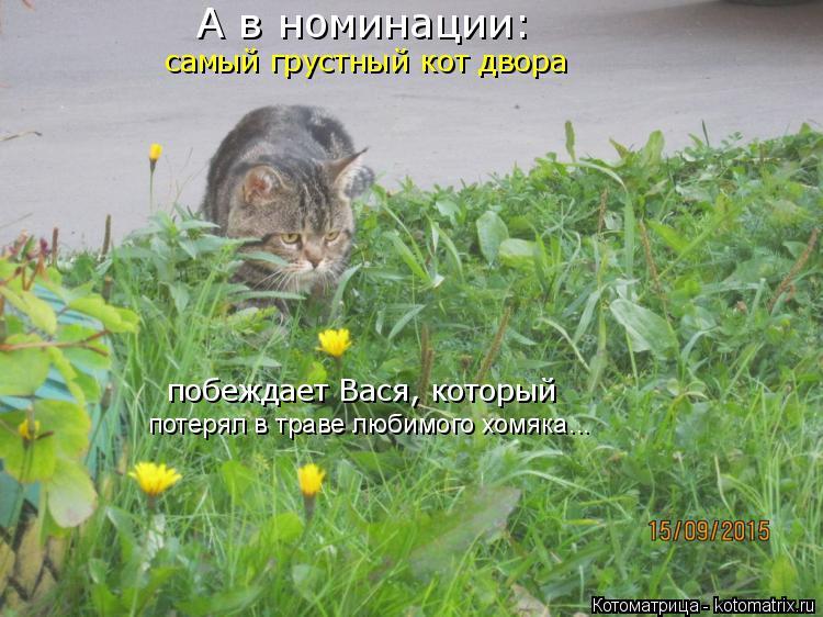 Котоматрица: A в номинации: самый грустный кот двора побеждает Вася, который потерял в траве любимого хомяка...