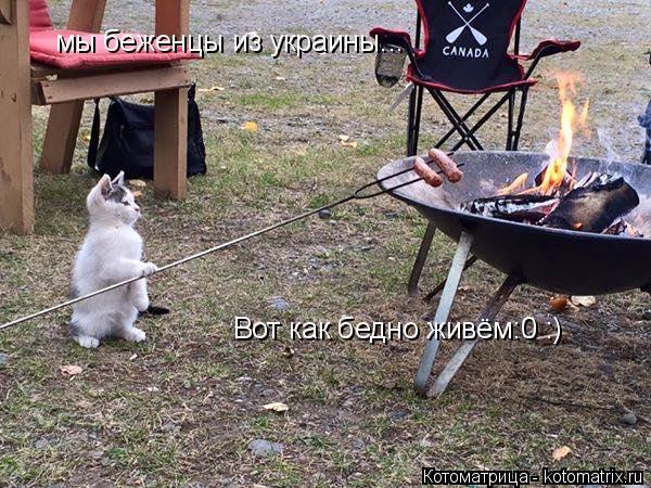 Котоматрица: мы беженцы из украины... Вот как бедно живём:0 :)