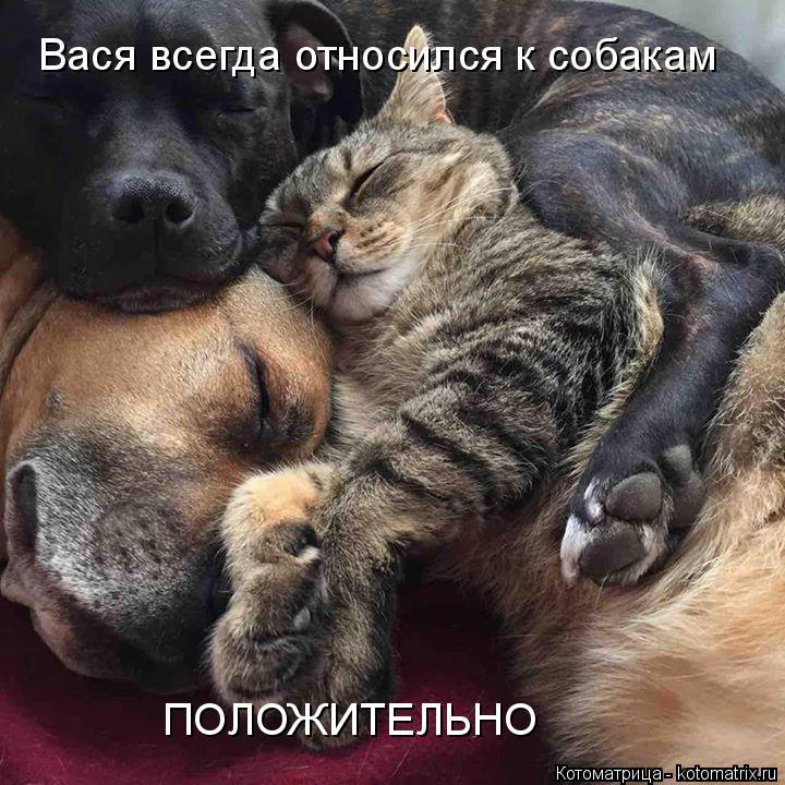 Котоматрица: Вася всегда относился к собакам ПОЛОЖИТЕЛЬНО