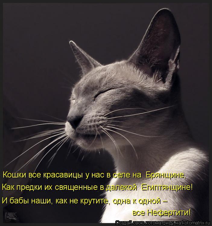 Котоматрица: Кошки все красавицы у нас в селе на  Брянщине, Как предки их священные в далекой  Египтянщине! И бабы наши, как не крутите, одна к одной –  все